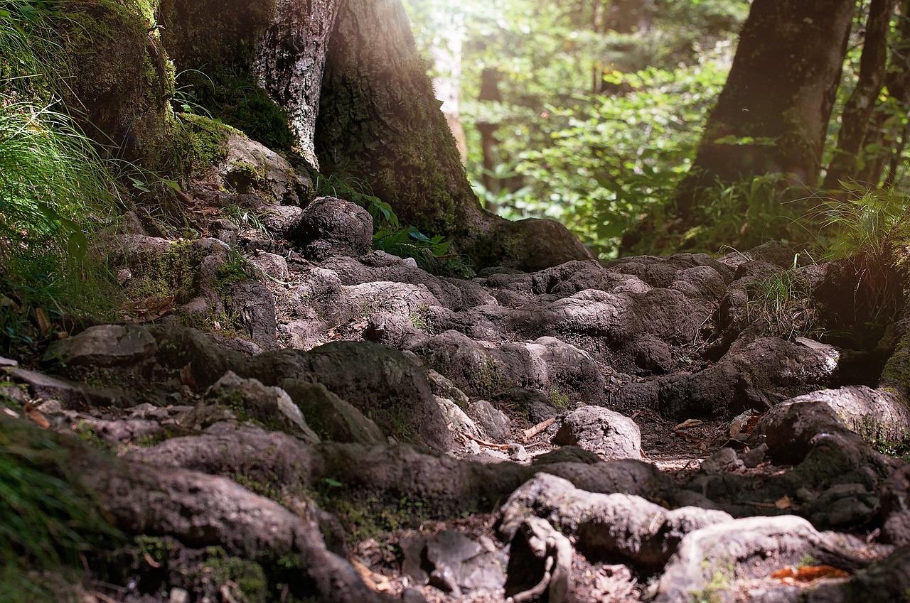 Comment lutter contre les racines envahissantes