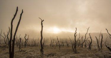 Comment l'écologie affecte-t-elle les humains