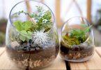 Comment entretenir son terrarium