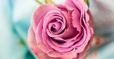 Ce que disent les fleurs