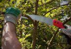 Comment élaguer les arbres de son jardin